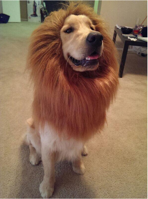 "They Told Him He Could Be Anything. So He Became..... ""Man, I wish I could say I was a big cat, but I'd be lion"""