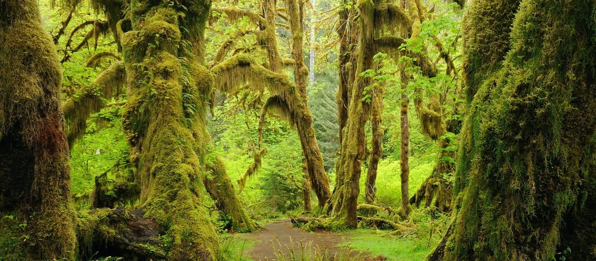 This is in the USA. The Hoh Rain Forest in Olympic National Park. Yes we (continental usa folks) have rain-forests and they are amazing to walk through... I've been there! Here's my picture of it.