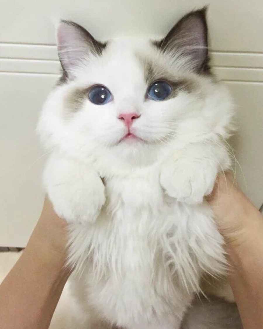 This kitteh wants your love. .. A cat is fine too