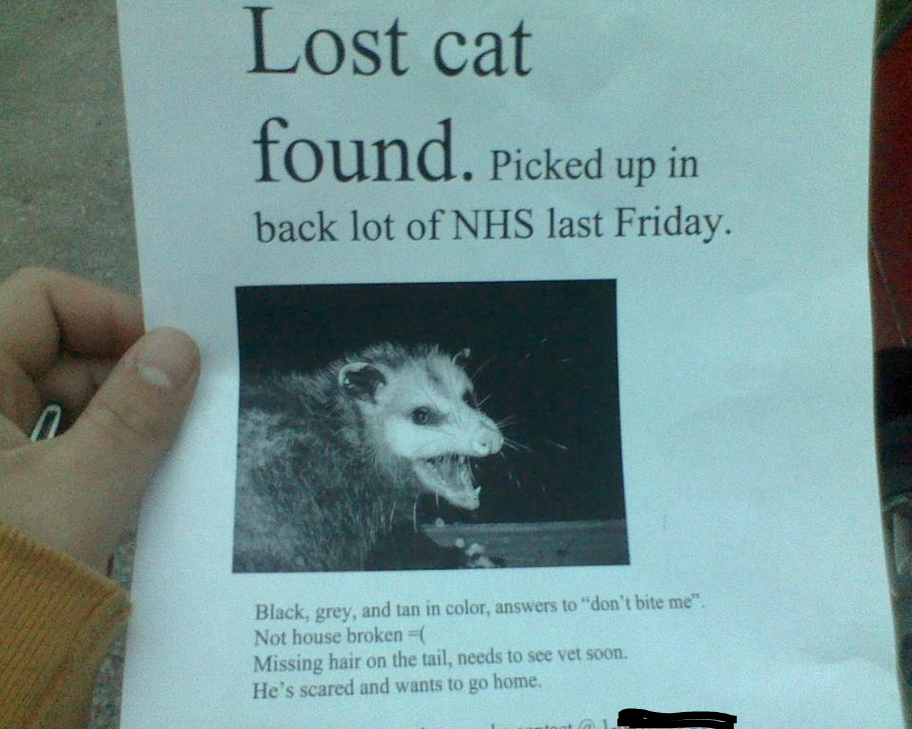 This motherer lost his ing cat. Let's all get together and find it. And read the description.. Lost cat found. Picked up in back lot of NTAS last Friday.. The possum isn't lost its been found... and its telling people that it has been