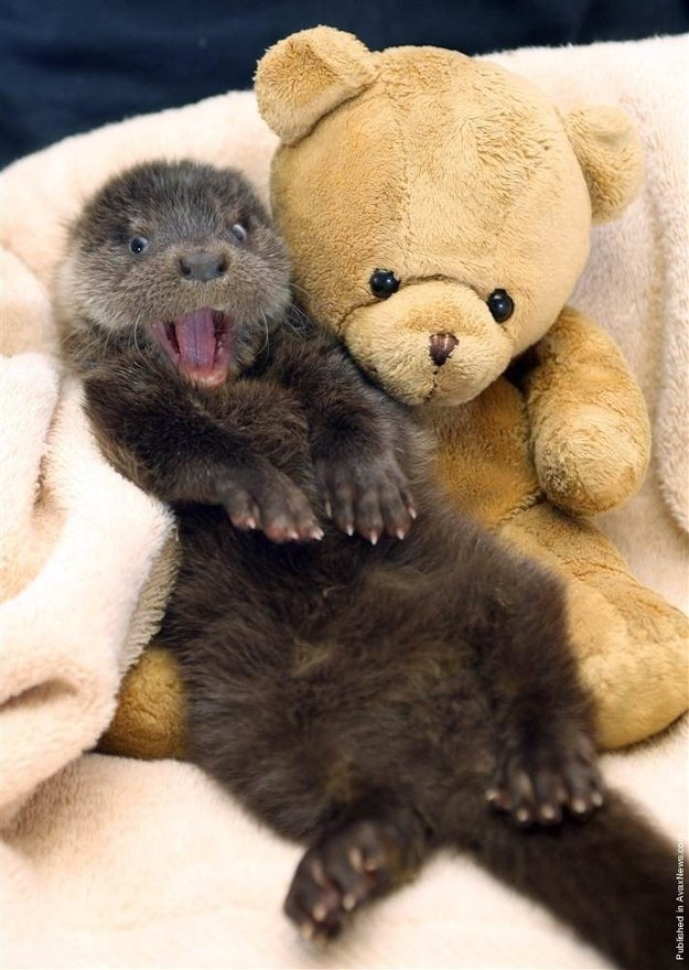 This Otter. Is very happy to see you.