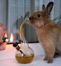 This Picture Only Has So Many Uses.... Today Is One.. 4/20, praise it.