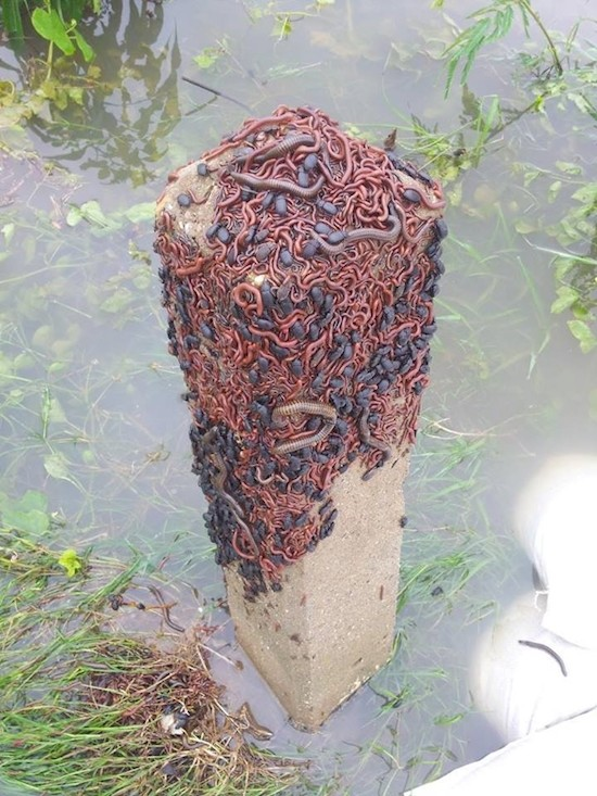"""This post needs to burn. .. >literally just a bunch of harmless worms, centipedes and slaters >""""omg so scary ewwww run away"""""""
