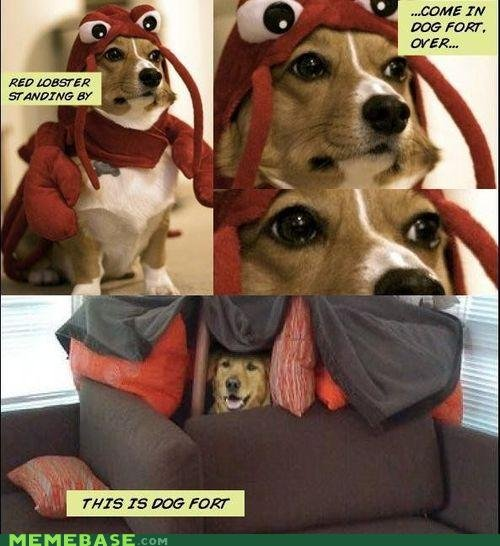 This is Dogfort. funny thing i found on memebase.com<br /> if you don't like it and thumb it down, please tell me why, so that i may improve future posts