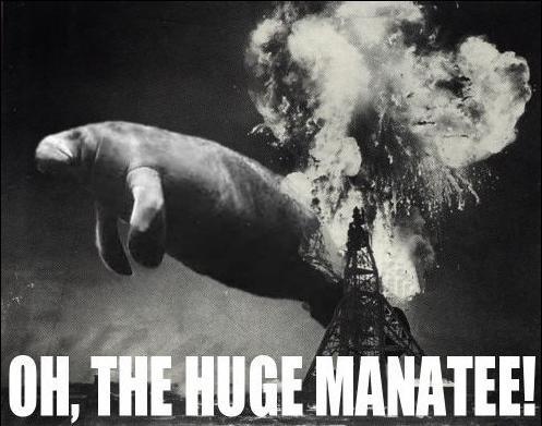 Those damn manatees. .