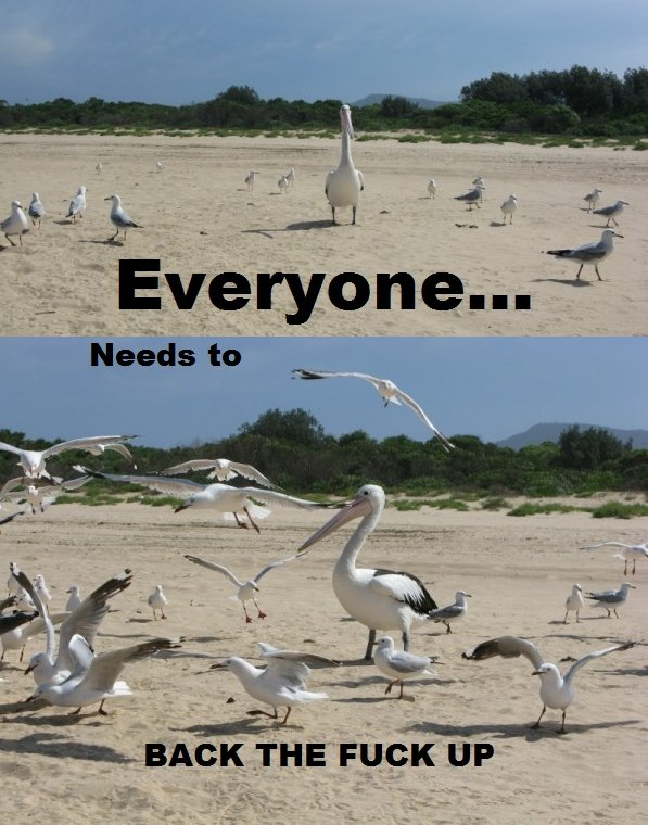 """those damn pelicans. . c.' c"""" T' Everyonelse'! new to THE' Fuck up -. Pelipper and Wingulls."""