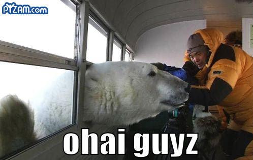 those damn polar bears. .