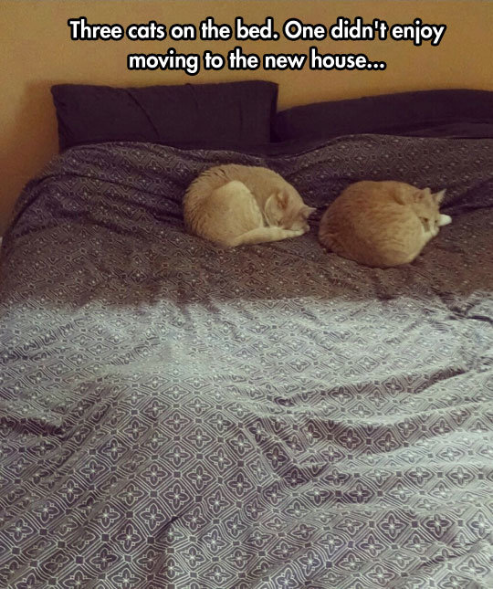 Three Cats On The Bed. Three Cats On The Bed .. No he just has PTSD