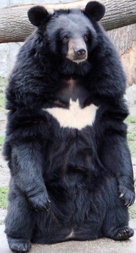 Thumb up bat bear for some justice. .. he's got the skills to boot