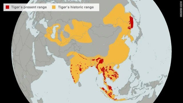 Tiger range. .. to think these poor creatures used to dominate the continent.. now only the embers remain.