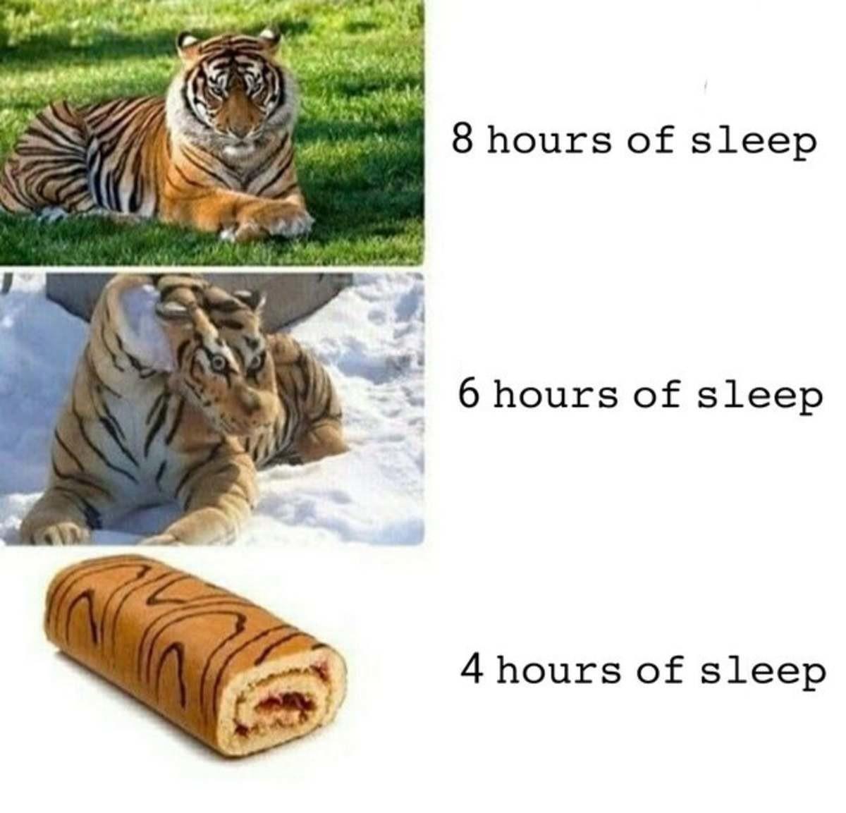 Tiger Roll. .