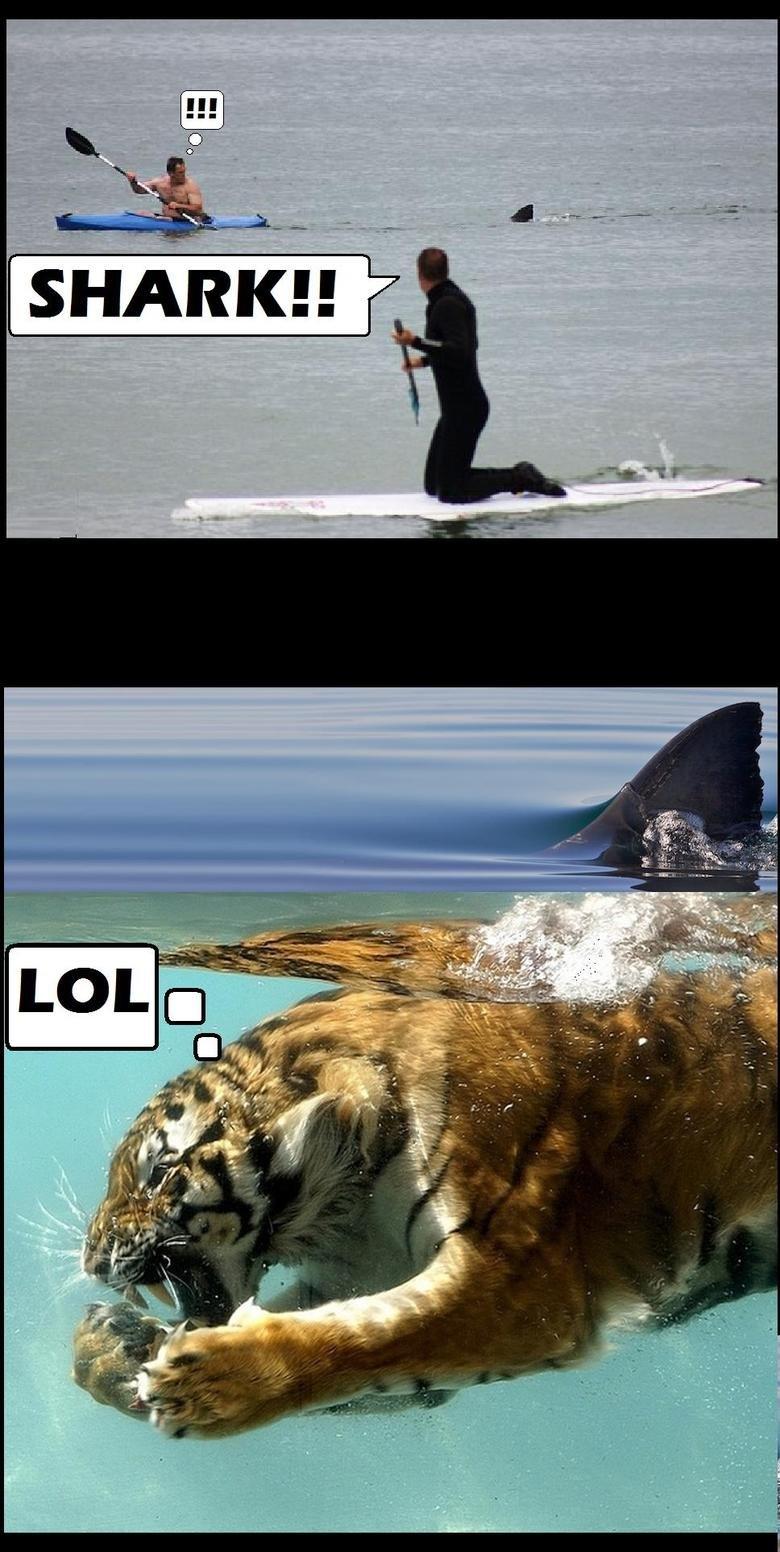 Tiger Shark.. .