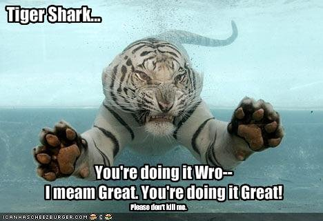 """tiger shark fail. . ating It WW"""" I Illegall Great. Imto' It ! 32 E Ci,. teeth, claws, either way your ripped to shreads"""