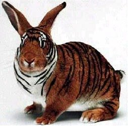 Tiger Rabbit. just got real... Tiger and Rabbit, my 2 favorite animals. Things just got awesomer
