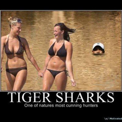 Tiger Shark. . HEW fl] Motown
