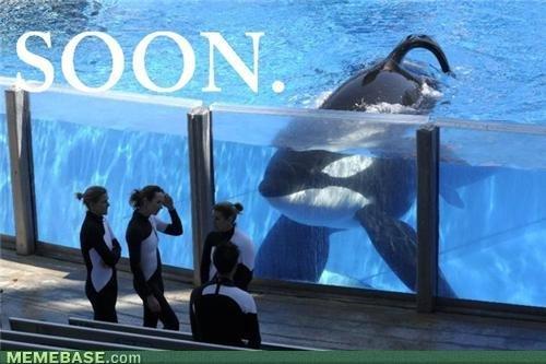 Tilikum KILLER Whale. Tilikum KILLER Whale.. I bet he has the weirdest boner.