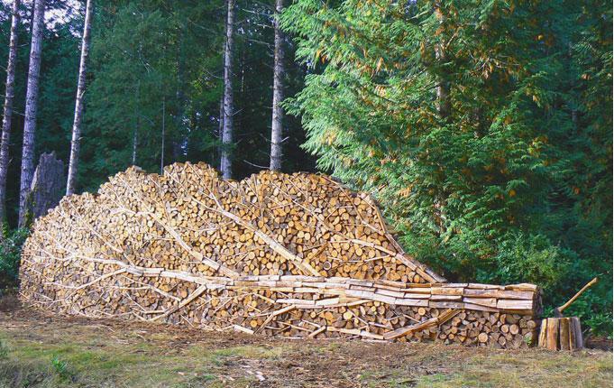 timber. Cool tree.
