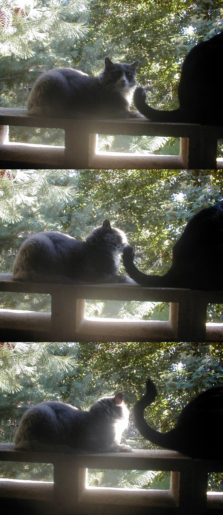 """Time Lapse. These three frames were the only files in a folder called """"timelapse"""" on a phone I had from 2005. I miss those cats.. tik"""