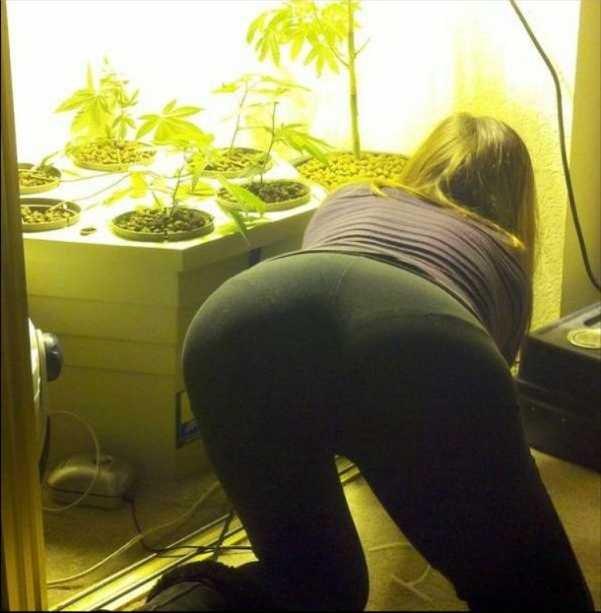 Time to Plant. .. she grew a bulbasaur