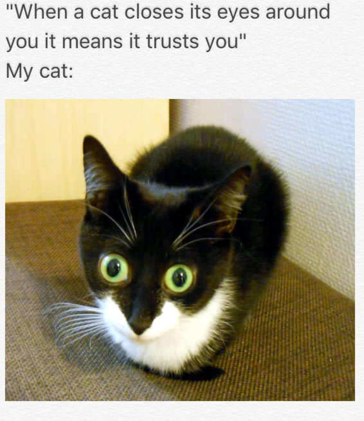 """Tiny cat Dump. join list: CuteKitty (401 subs)Mention History. it , ii it trusts you"""" My cat:lloll! iii' Alli, t Tami Look at this stupid idiot 10: 32 PM . 31 D"""