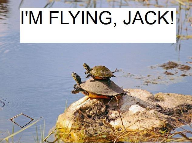 titanic: turtles. . I' M FLYING, JACK!. I was expecting giant turtles...