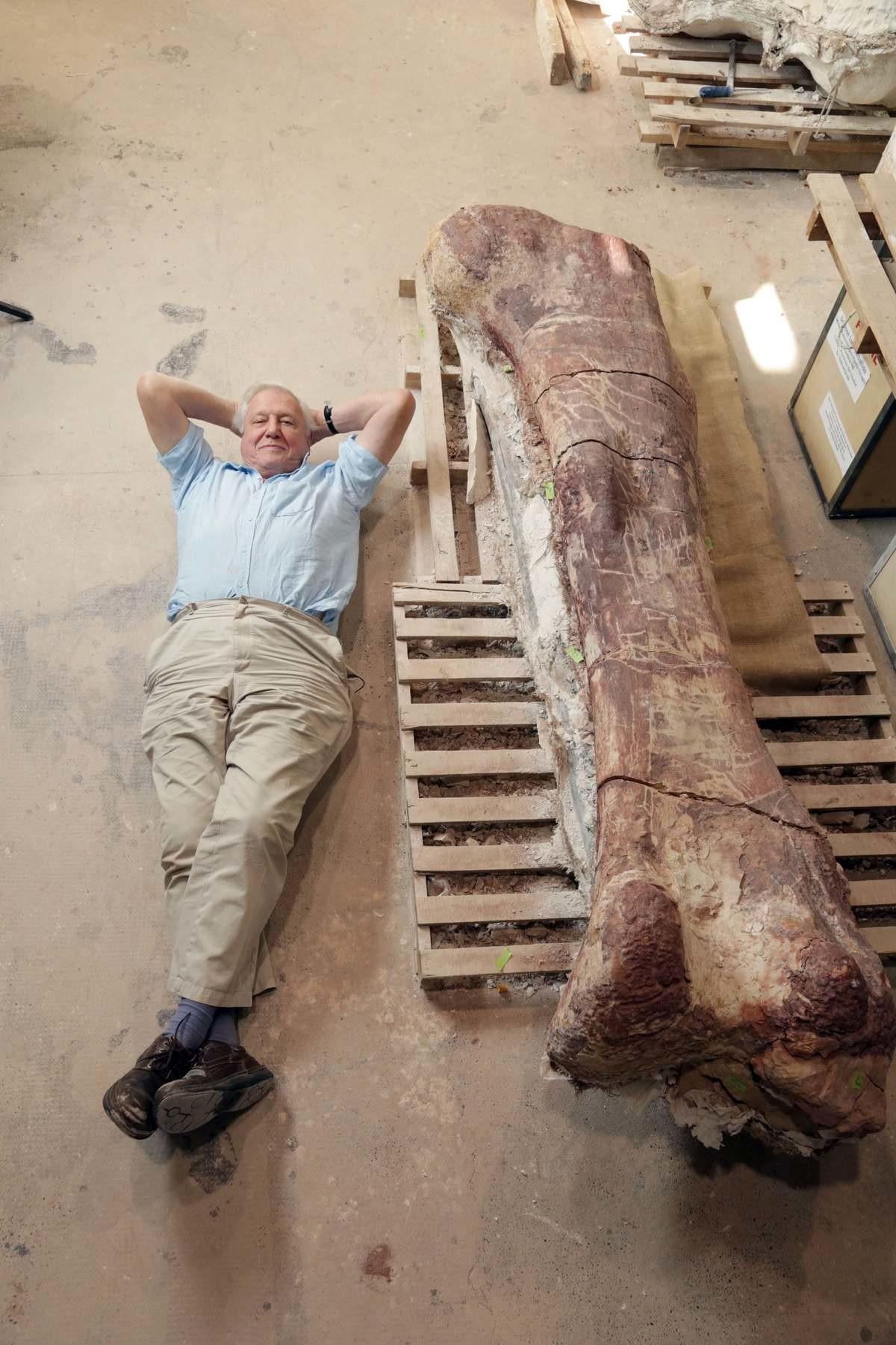 Titanosaur Vs David Attenborough. Sir David Attenborough and a Titanosaur bone. Titanosaurs (members of the group Titanosauria) were a diverse group of sauropod