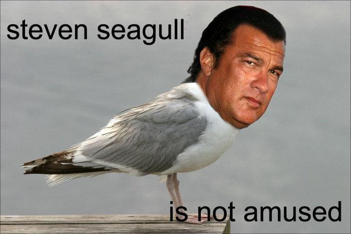 Title. . steven seagull