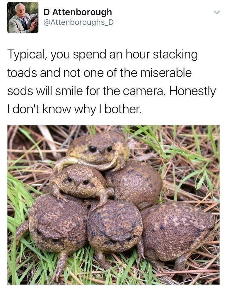 toads. .. nine toads to make a three toad high stack? Pathetic