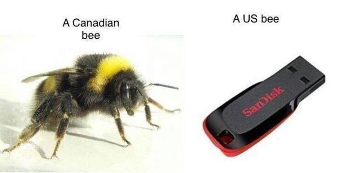 Today on 'content your dad would appreciate'. . A Canadian A us bee bee