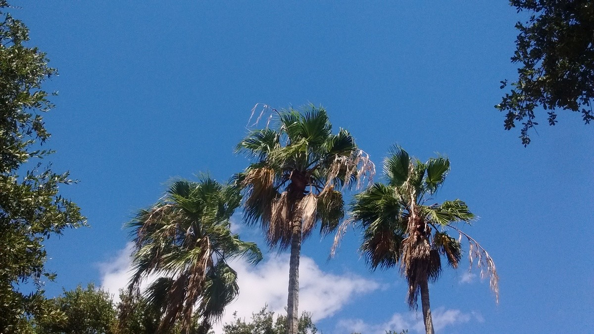 Today. Palm trees Barnacles.. Billions of blering barnacles, whats this?