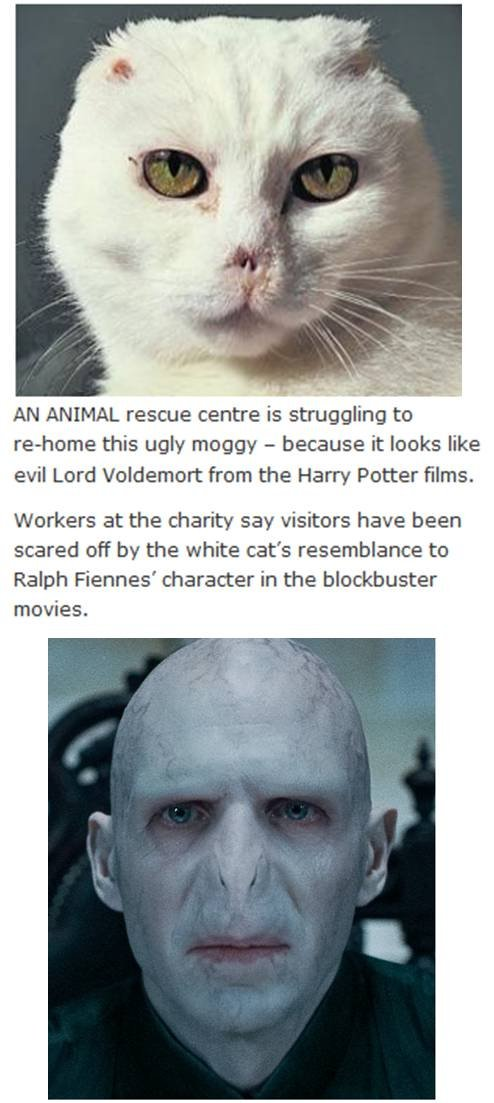 Today in the news. Who is scared of a Voldemort looking Cat???. AN ANIMAL rescue centre is struggling to rehome this ugly moggy ll because it looks like evil Lo