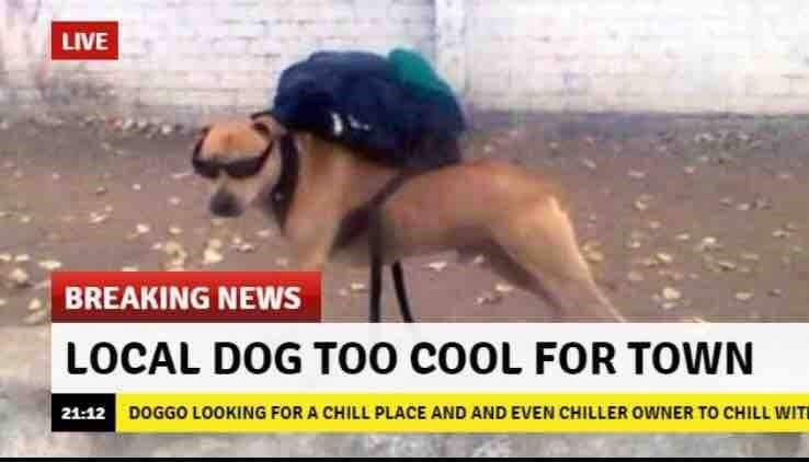 Too cool. .. I bet he gets all the bitches