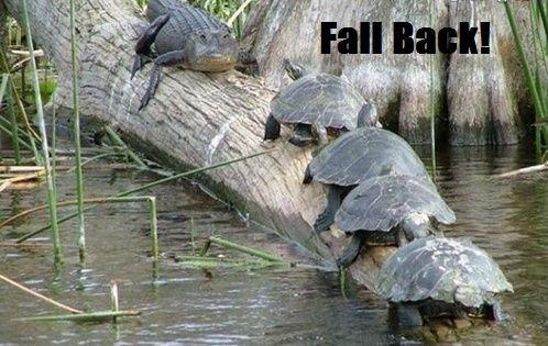 Too late. I like turtles.