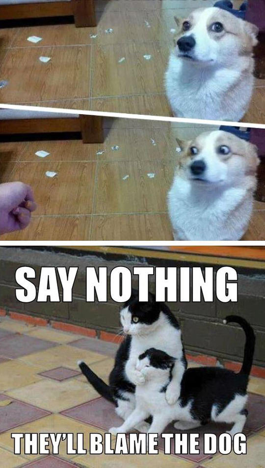 Training. Asshole cats.