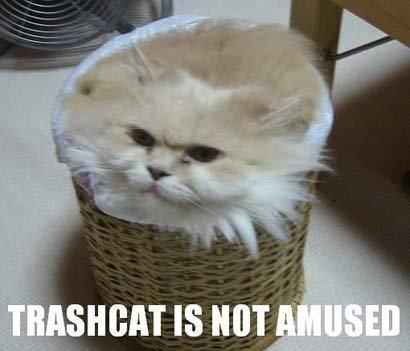 Trash cat. .