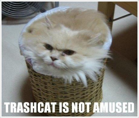 TRASH CAT. hahahaha.... not amused -_-. it. sum IS MIT g