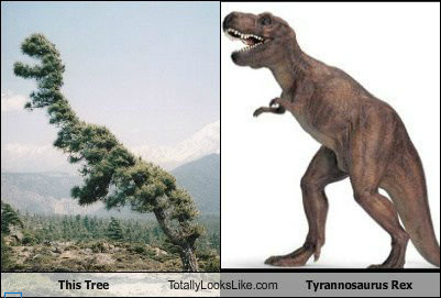 Tree vs. T-Rex. Open the door, get on the floor Everybody walk the dinosaur xD.. Mfw walk the dinosaur.