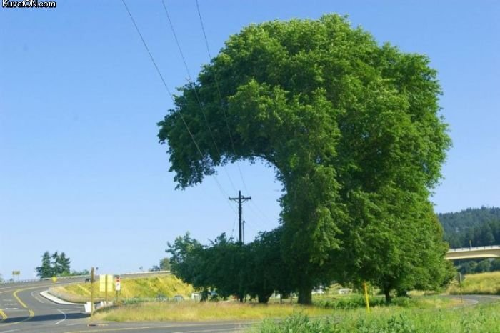 tree win. pacman?.. TSUNAMI OF TREES