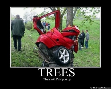 """Tree's. Hey look!...that """"was"""" my car. They will f' -ck you up ml Phylum -ram"""