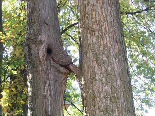 Tree Win. .. treegasm!