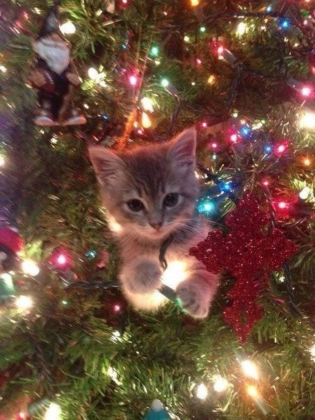 treecats. .. anyone have that picture of a cat seeing a lit up christmas tree and he looks like he just saw the most magical thing in the world?