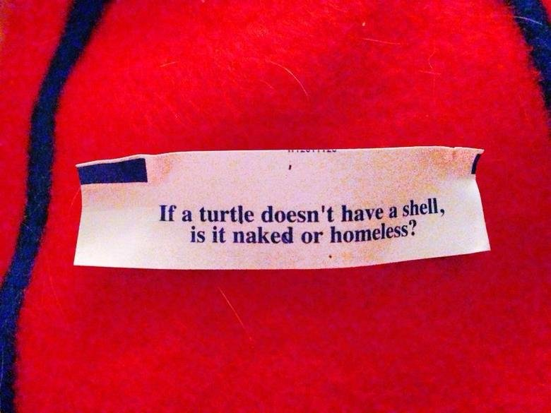 Trick Question.... turtle's die without their shell. Bears, Beats, Battlestar Galatica.. If doesn' t have ll, lla! IS It naked or homeless?. Regardless if they die or not, why can't it be both? Naked and homeless.