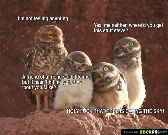"""Tripping Owls. . I' not feeling anyhting A friend at trip' g' taed itte.""""; but it hasn' t hit tnaogf, ii! ' tout you Mike? Yea. me neither, where' -:1 you get t"""