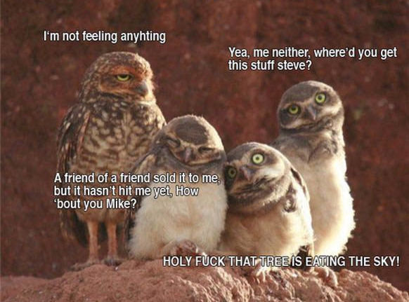 tripping owls. my friend sent it to me<br /> idk and idc if its a repost <br /> P.S. THE OWLS ARENT REALLY HIGH. rm not feeling anyhting Yea. me nei