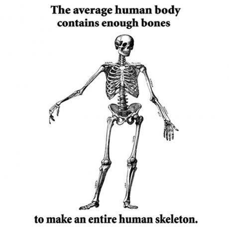 True Fact, believe it. . The average human body contains enough bones to make J,; mire Liu, skeleton.