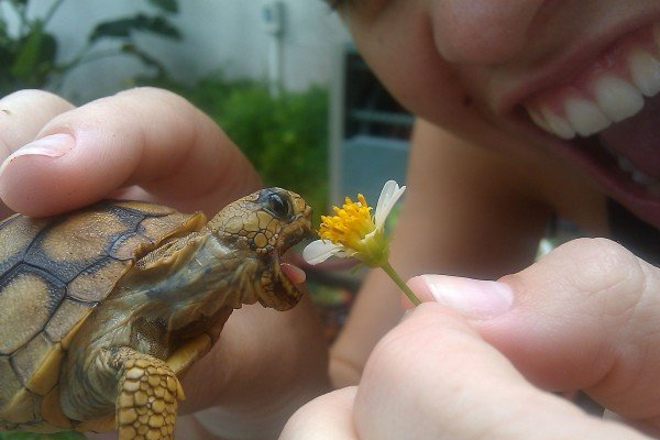 True happiness. turtles>bendingtime.. This thread is now turtles eating stuff.