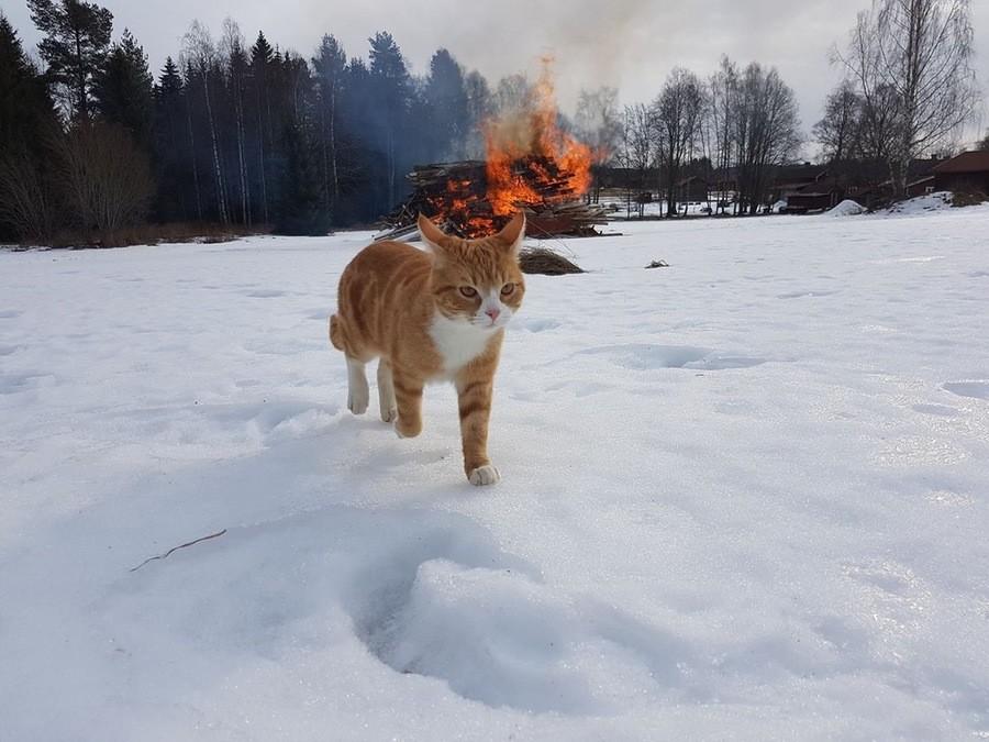 True Norwegian Cat. join list: Suesskram (451 subs)Mention History.. epic
