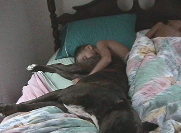 True Dog lover. I really hope hes sleeping....... waht a brown noser...