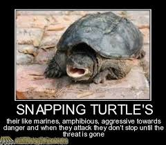 true. . SN WING TURTLE' S htae like marine?, amphibious, Eng restive danger and man may aright: they an'! amp atmeal Is we