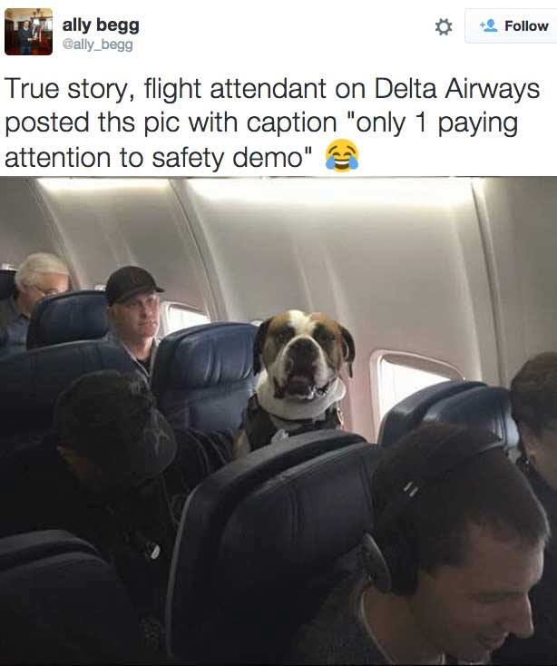 "true. . True story, flight attendant on Delta Airways posted the pic with caption ""only i paying attention to safety demo"" uh' if, tll,. Awww what a good dog"
